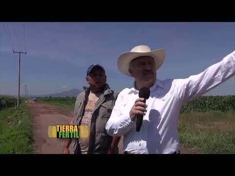 TIERRA FÉRTIL Tomatillo y máiz (5 de septiembre de 2014)