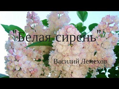 Читать онлайн - Степнова Марина Львовна. Женщины Лазаря