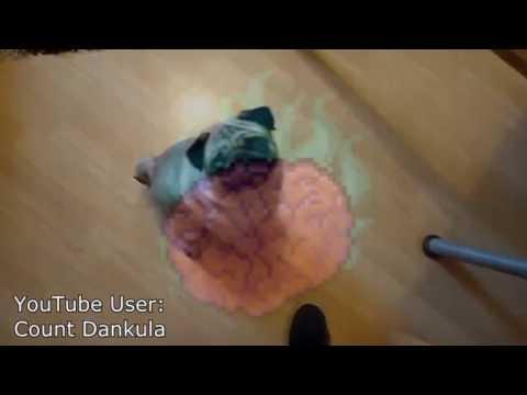 Scottish Police Condemn Nazi Pug Mirror Youtube