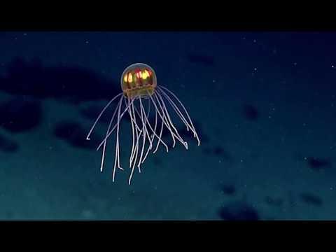 Ученые открыли новый вид морских животных