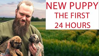 NEW PUPPY! How To Survive The First 24 Hours
