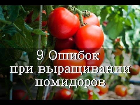 9 Ошибок при выращивании Помидоров