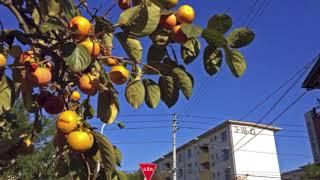 編曲:高橋美夕己 フジテレビ系月9ドラマ「民衆の敵~世の中、おかしく...