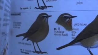Γιατί πρέπει να προστατεύουμε τα πουλιά (Ε.Ο.Ε.)