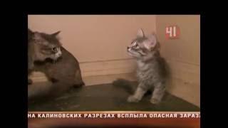 Кладбище для кошек