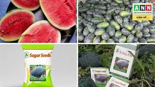 लागत 50 हजार-कमाई 1.5लाख,सागरकिंग तरबूज बीज,Sagar king Tarbuj,Best Watermelon Seed Variety India