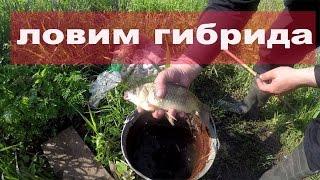 Рыбалка в Ростове