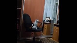 Кошка Джулия смотрит фильм ужасов