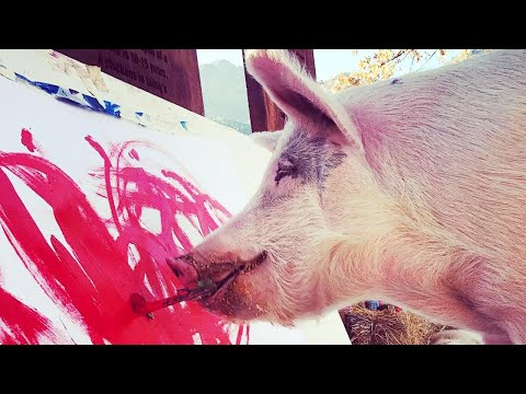 Nathalie Rodriguez - Move Over Van Gogh, Meet Pigcasso