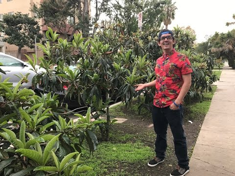 Loquat FOREST in Los Angeles!