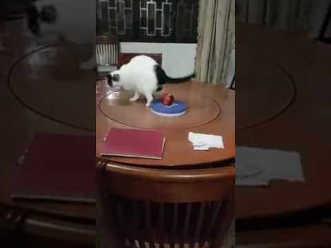 Cat On a Lazy Susan, Getting Some Exercise