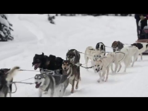 Four Seasons Jackson Hole - Get Behind The Reins With A Dog Sled Tour