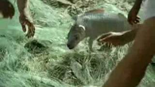Собака-рыба (DogFish)  -  реклама Volkswagen SpaceFox ;)