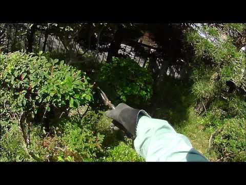 Japanese garden maintenance use Japan Garden Shear #2