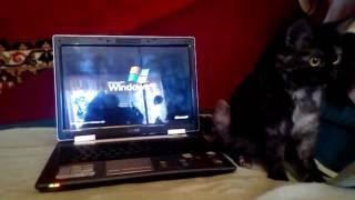 видео Ноутбук  ASUS Z99H (90NEHY349316160C307Y) - описание, отзывы, фото, характеристики, цена - Hi-Tech Mail.Ru