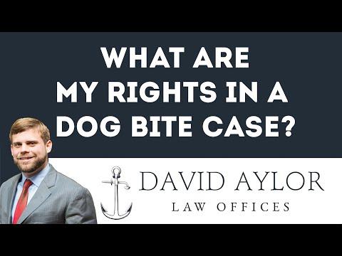 Dog Bite Lawyer Charleston, SC
