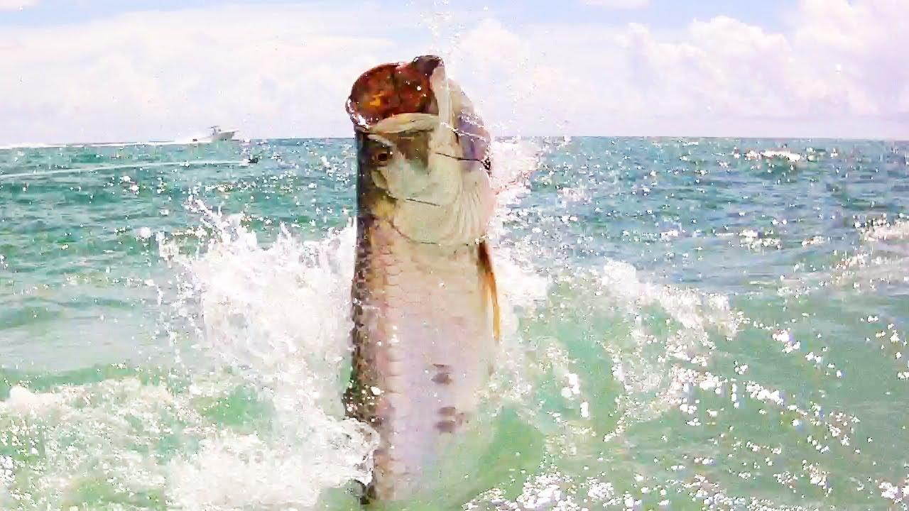 Tarpon Fishing on the Beach