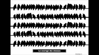 Le courage des oiseau (vynil)/Dominique A