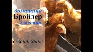 видео Бизнес на инкубации яиц  сельскохозяйственных птиц