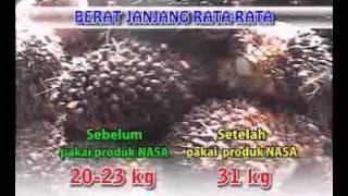 Cara pemupukan kelapa sawit