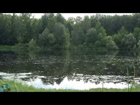 Вопрос: Кто издает на болотах звук напоминающий дудочку?