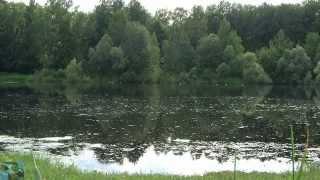 Download Звуки природы. Ольняный пруд. Лягушки Mp3 and Videos