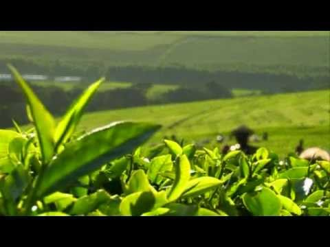 Kericho My Home: Life on Lipton's Kenyan tea estate