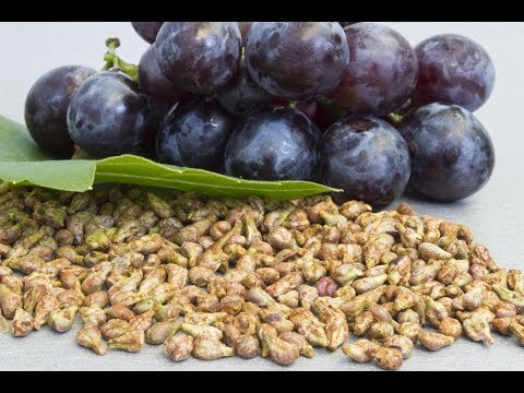 5 Serious Side Effects Of Grape Seed Extract important to know