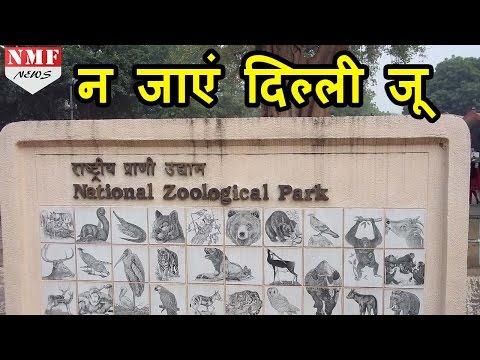 Delhi Zoo जाना मना है, हो सकता है आपको भी Bird Flu |MUST WATCH !!!