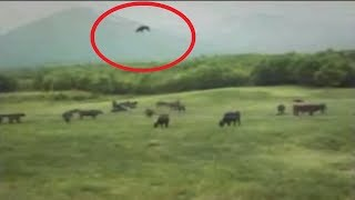 5 Hiện Tượng Bí Ẩn Vô Tình Được Camera Quay Lại ||  5 Strange Phenomena Caught On Camera
