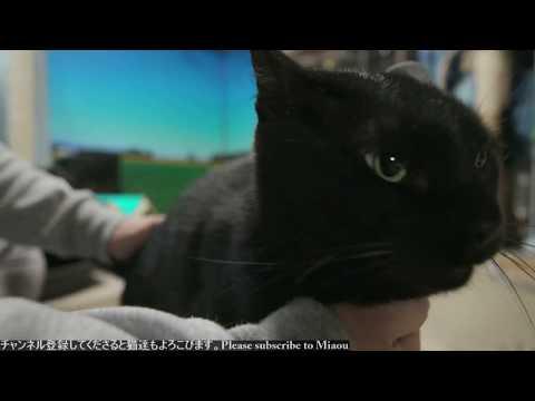 2018.6.11 猫日記 3匹のゴロゴロ   Cats & Kittens room 【Miaou みゃう】