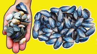 How To Recycle/Reuse Mussels Shells|Best Out of Waste