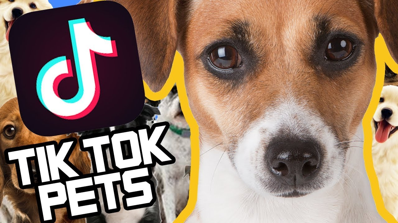 Tiktok A Love Hate Relationship Between A Dog And The Owner Facebook
