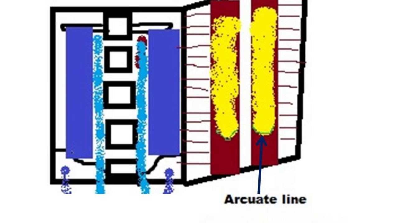 Arcuate line rectus sheath - YouTube