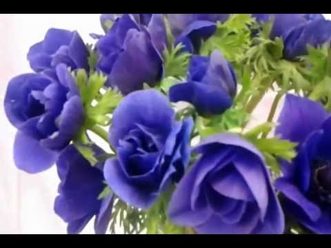 Fresh Blue And Lavender Anemone Flowers Cut