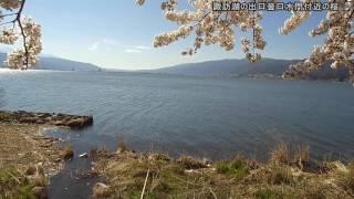 20170423 4K 諏訪湖の出口釡口水門付近の桜咲く