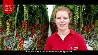 Teeltverantwoordelijke Jelle - Werken bij Den Berk Délice