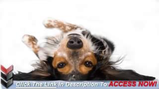 How To House Train A Dog
