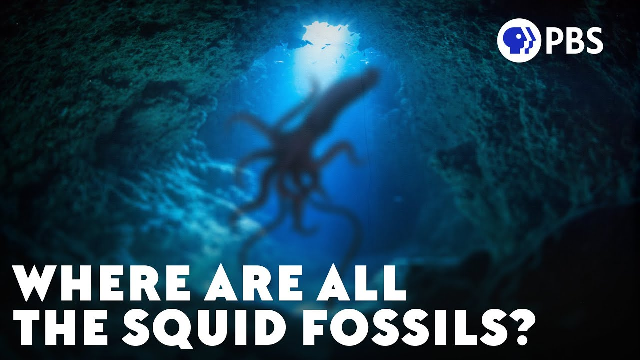 Where Are All The Squid Fossils?