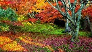 Autumn |  Ambient, Minimalism, Piano Music