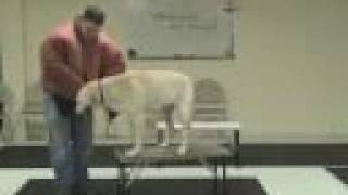 Aggressive Dog Training And Aggression Rehab Tips (www.k9-1.com)