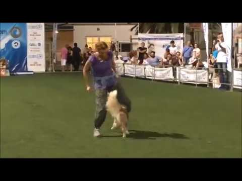 Karma in Dog dancing, agility and frisbee!