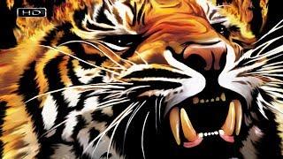 Самая Большая Кошка Планеты - Амурский Тигр