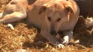 Отловом безнадзорных животных в Самарской области займутся муниципалитеты
