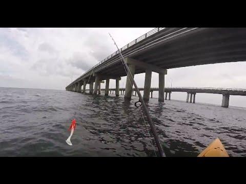 Chesapeake Bay Bridge Tunnel Fishing September 2015. Spadefish, Shark, ++ more