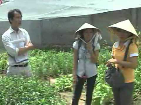 Visit Vietnamese medicine garden ,mushroom house in Ho Chi Minh Cooking Class