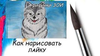 Как нарисовать собаку хаски.(Как нарисовать собаку хаски. В этом видео я пробую нарисовать собаку породы хаски. Интересный канал для..., 2016-05-20T07:00:10.000Z)