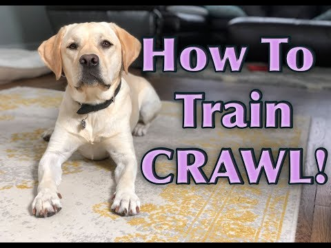 Dog Trick Tutorial: CRAWL!