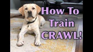 Dog Trick Tutorial: CRAWL!