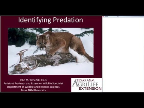 Wildlife for Lunch - March 2016 - Identifying Predation on Wildlife and Livestock